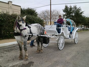 White Horse and carriage company wedding carriage mathis tx